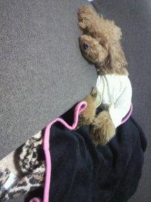 愛犬鈴ちゃん~トイプードル☆ライフスタイル~-2012072220380001.jpg