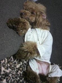 愛犬鈴ちゃん~トイプードル☆ライフスタイル~-2012072220400001.jpg