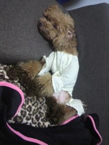 愛犬鈴ちゃん~トイプードル☆ライフスタイル~-2012072220390000.jpg