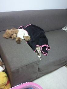 愛犬鈴ちゃん~トイプードル☆ライフスタイル~-2012072220400003.jpg