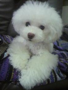 愛犬鈴ちゃん~トイプードル☆ライフスタイル~-2012072422530000.jpg