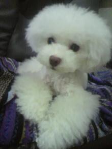 愛犬鈴ちゃん~トイプードル☆ライフスタイル~-2012072422530001.jpg