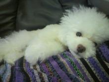 愛犬鈴ちゃん~トイプードル☆ライフスタイル~-2012072422540001.jpg