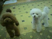 愛犬鈴ちゃん~トイプードル☆ライフスタイル~-2012072422570000.jpg