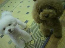 愛犬鈴ちゃん~トイプードル☆ライフスタイル~-2012072422580000.jpg