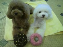愛犬鈴ちゃん~トイプードル☆ライフスタイル~-2012072517380000.jpg