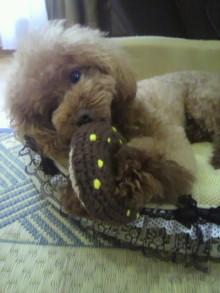 愛犬鈴ちゃん~トイプードル☆ライフスタイル~-2012072517390002.jpg