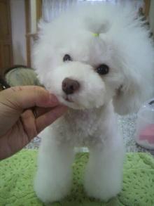 愛犬鈴ちゃん~トイプードル☆ライフスタイル~-2012072517490000.jpg