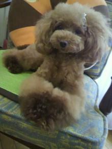 愛犬鈴ちゃん~トイプードル☆ライフスタイル~-2012072517560001.jpg