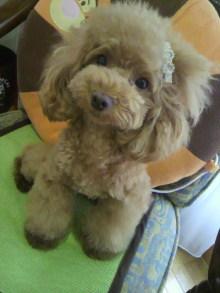 愛犬鈴ちゃん~トイプードル☆ライフスタイル~-2012072517570000.jpg