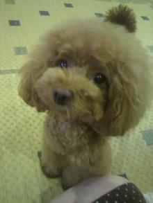 愛犬鈴ちゃん~トイプードル☆ライフスタイル~-2012072518570000.jpg