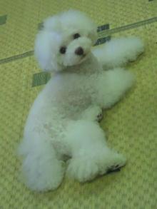 愛犬鈴ちゃん~トイプードル☆ライフスタイル~-2012072519450000.jpg