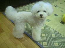 愛犬鈴ちゃん~トイプードル☆ライフスタイル~-2012072518550001.jpg