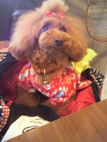 愛犬鈴ちゃん~トイプードル☆ライフスタイル~-2012072612270000.jpg