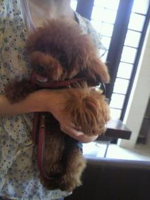 愛犬鈴ちゃん~トイプードル☆ライフスタイル~-2012072611400001.jpg