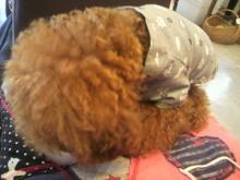 愛犬鈴ちゃん~トイプードル☆ライフスタイル~-2012072612090001.jpg