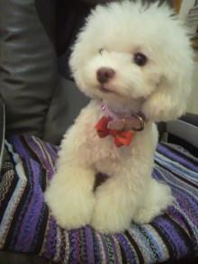 愛犬鈴ちゃん~トイプードル☆ライフスタイル~-2012072419020000.jpg