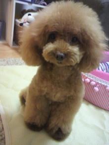 愛犬鈴ちゃん~トイプードル☆ライフスタイル~-2012072618520001.jpg
