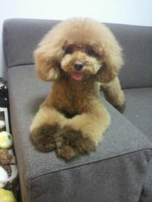 愛犬鈴ちゃん~トイプードル☆ライフスタイル~-2012072618530000.jpg