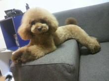愛犬鈴ちゃん~トイプードル☆ライフスタイル~-2012072618530001.jpg