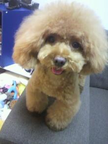 愛犬鈴ちゃん~トイプードル☆ライフスタイル~-2012072618540000.jpg