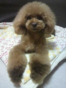 愛犬鈴ちゃん~トイプードル☆ライフスタイル~-2012072618540001.jpg