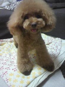 愛犬鈴ちゃん~トイプードル☆ライフスタイル~-2012072618550000.jpg