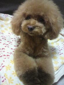 愛犬鈴ちゃん~トイプードル☆ライフスタイル~-2012072618570002.jpg
