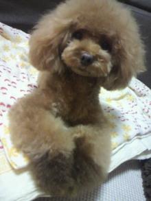 愛犬鈴ちゃん~トイプードル☆ライフスタイル~-2012072618570003.jpg