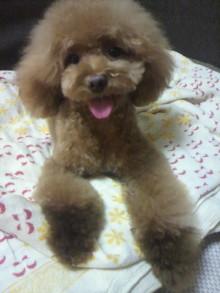 愛犬鈴ちゃん~トイプードル☆ライフスタイル~-2012072618560001.jpg