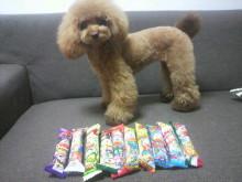 愛犬鈴ちゃん~トイプードル☆ライフスタイル~-2012072621390000.jpg