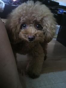 愛犬鈴ちゃん~トイプードル☆ライフスタイル~-2012072907500000.jpg