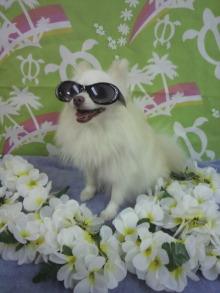 愛犬鈴ちゃん~トイプードル☆ライフスタイル~-2012080119510000.jpg