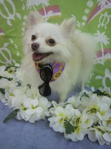 愛犬鈴ちゃん~トイプードル☆ライフスタイル~-2012080119530000.jpg