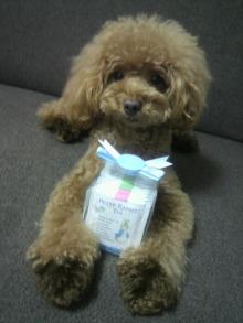 愛犬鈴ちゃん~トイプードル☆ライフスタイル~-2012080319460000.jpg
