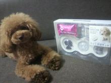 愛犬鈴ちゃん~トイプードル☆ライフスタイル~-2012080323000000.jpg