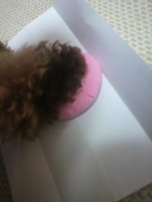 愛犬鈴ちゃん~トイプードル☆ライフスタイル~-2012080323080000.jpg
