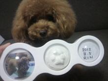 愛犬鈴ちゃん~トイプードル☆ライフスタイル~-2012080710200000.jpg