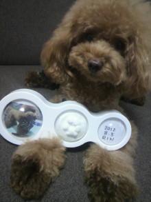 愛犬鈴ちゃん~トイプードル☆ライフスタイル~-2012080710170000.jpg