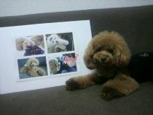 愛犬鈴ちゃん~トイプードル☆ライフスタイル~-2012080710200001.jpg