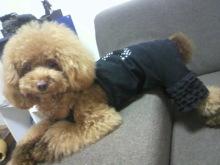 愛犬鈴ちゃん~トイプードル☆ライフスタイル~-2012080710230000.jpg