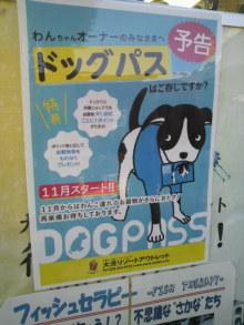 愛犬鈴ちゃん~トイプードル☆ライフスタイル~-2012080510390000.jpg