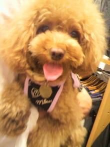 愛犬鈴ちゃん~トイプードル☆ライフスタイル~-2012080510440001.jpg