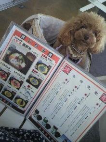 愛犬鈴ちゃん~トイプードル☆ライフスタイル~-2012080511550000.jpg