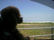愛犬鈴ちゃん~トイプードル☆ライフスタイル~-2012080512460000.jpg