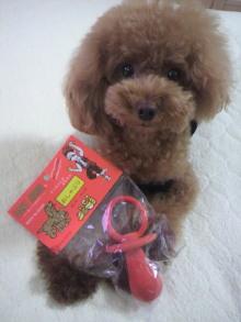 愛犬鈴ちゃん~トイプードル☆ライフスタイル~-2012080711460000.jpg
