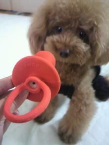 愛犬鈴ちゃん~トイプードル☆ライフスタイル~-2012080711460001.jpg