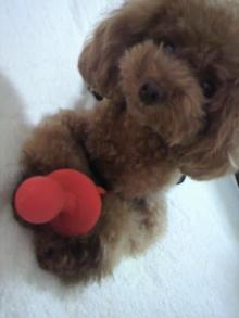 愛犬鈴ちゃん~トイプードル☆ライフスタイル~-2012080711470000.jpg