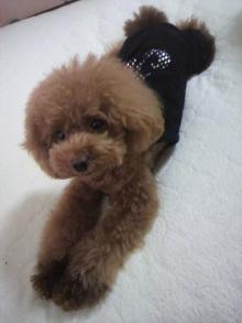 愛犬鈴ちゃん~トイプードル☆ライフスタイル~-2012080711480001.jpg