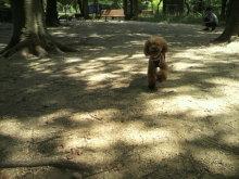 愛犬鈴ちゃん~トイプードル☆ライフスタイル~-2012080514080003.jpg